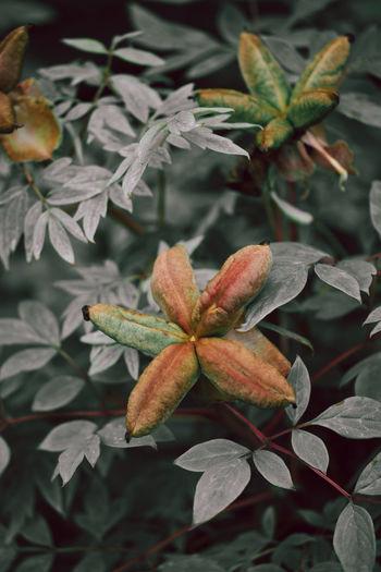 Close-up of orange rose on leaves