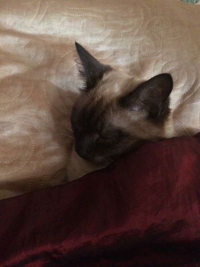 Спит котик мой