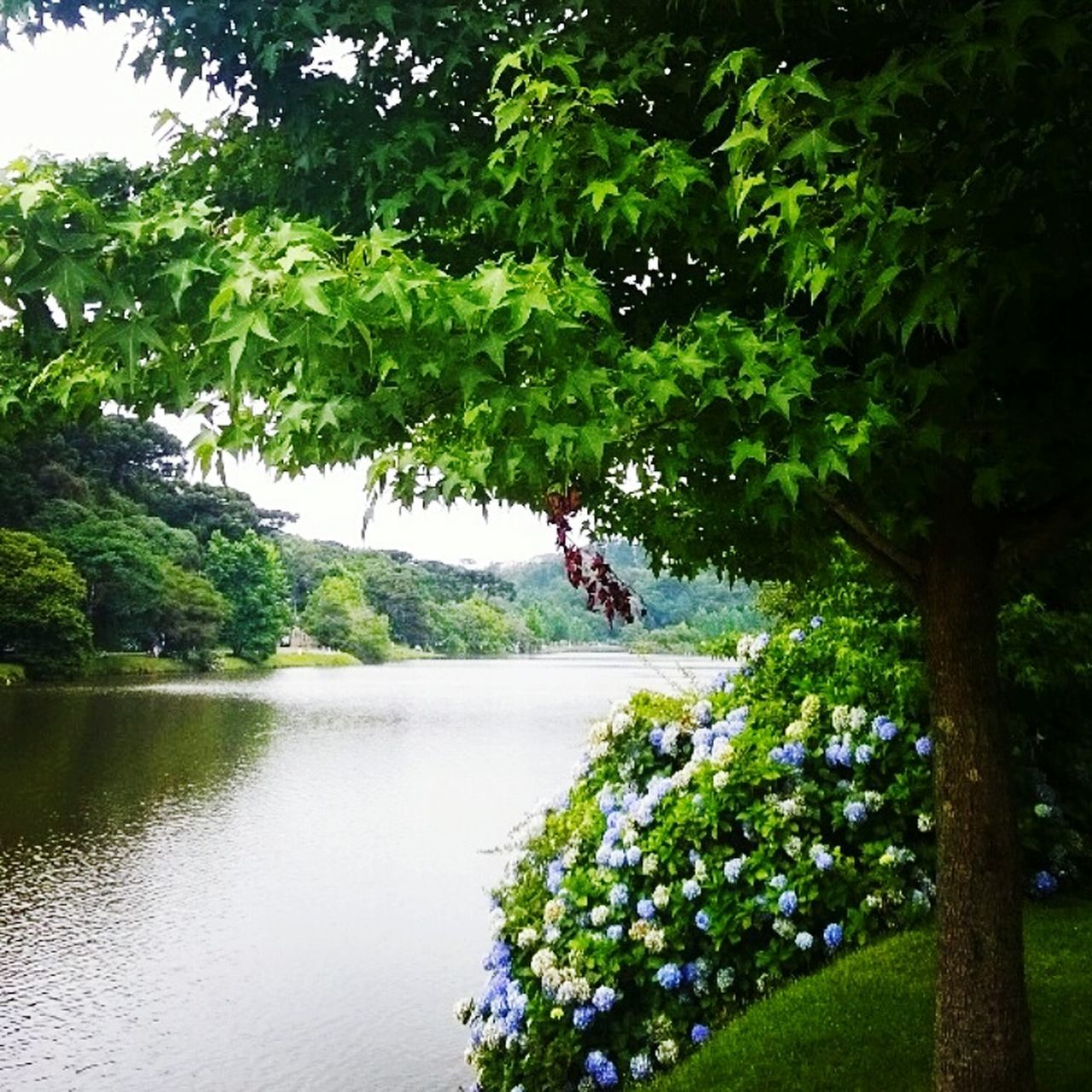 tree, nature, growth, beauty in nature, water, green color, plant, tranquility, day, outdoors, no people, tranquil scene, flower, scenics, freshness, sky