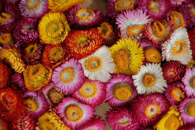 Flower Head Flower Multi Colored Full Frame Yellow Petal Market Purple Backgrounds Close-up Barrel Cactus Thorn Passion Flower Prickly Pear Cactus Flower Market Succulent Plant Sharp Cactus Pollen Flower Shop Saguaro Cactus Needle - Plant Part Aloe Razor Wire Marigold Spiky Aloe Vera Plant Stamen Sunflower Spiked