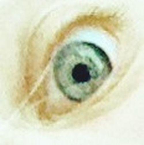 Supernormal Eye Swimming