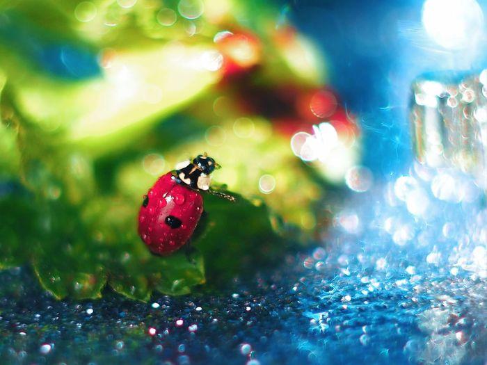Close-up of ladybug on wet leaf
