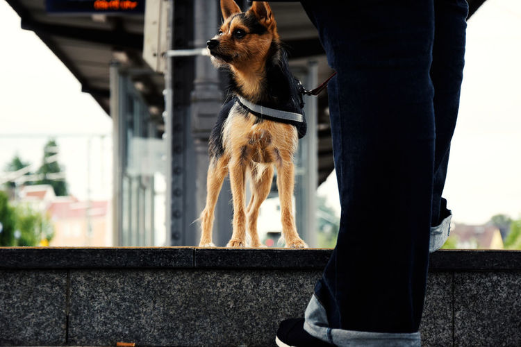 Low Section Of Man With Dog Standing At Railroad Station Platform