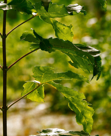Beauty In Nature Close-up Focus On Foreground Freshness Green Color Growth Leaf Nature No People Outdoors Simmetricalnature Simmetry Tree