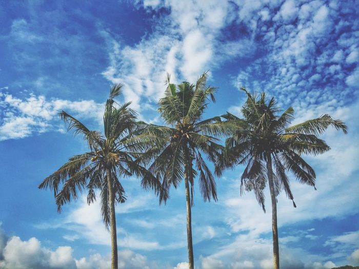 Where the coco palms are! Hello to all from beautiful Bali!😎🌴☀️📷👌 Holiday Enjoying Life Relaxing Iphone6 Bali, Indonesia Candidasa Bali Exotic Outdoors Tropical Paradise Coconut Trees Cocopalms Palm Trees Blue Sky Copy Space Landscapes With WhiteWall