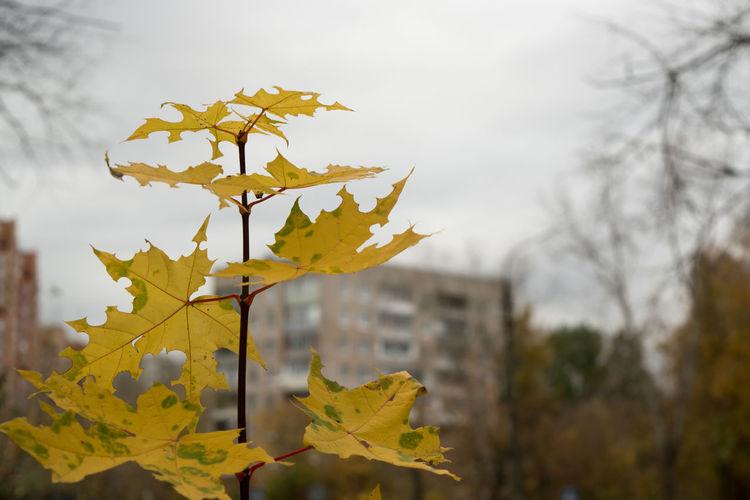 В городе осень