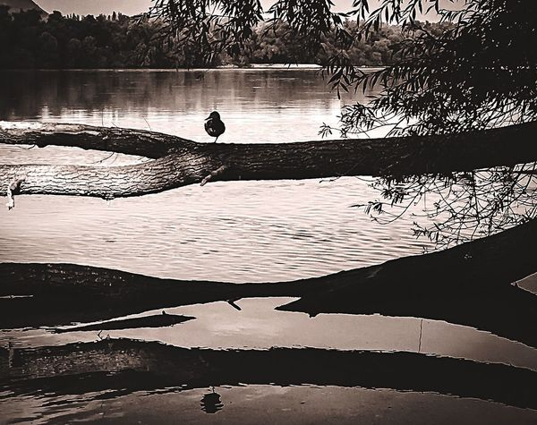 Autumn at the Danube Water Tranquil Scene Scenics Nature Beauty In Nature Outdoors Tree Trunk Branch No People Black And White Danube Bird Animals Reflection