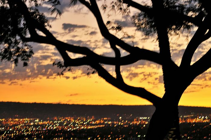 Trees Sunset Silhouette Anonymousnate Photography My View Signal Hill Hello World Capture The Moment