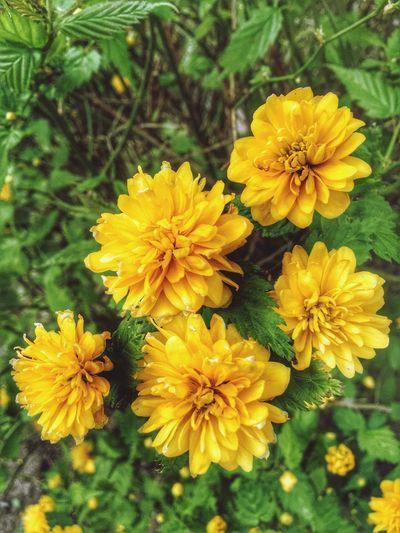 Yellow Flower Something Yellow