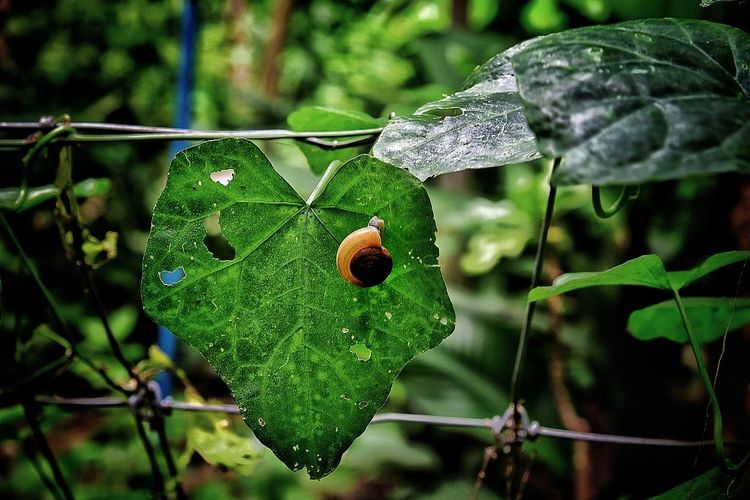 Green Color Insect Focus On Foreground Close-up Plant Growth Leaf Day No People Animals In The Wild Animal Themes Nature Outdoors Animal Wildlife Freshness Beauty In Nature Fragility Prickly Pear Cactus