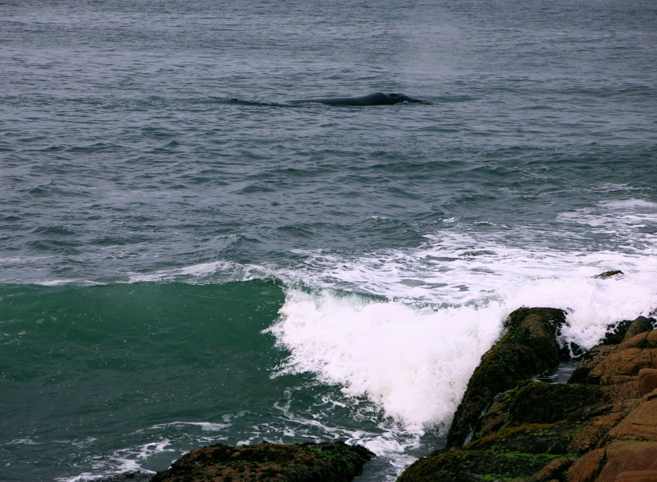 sea, water, wave, nature, no people, beauty in nature, day, outdoors, scenics, close-up, mammal