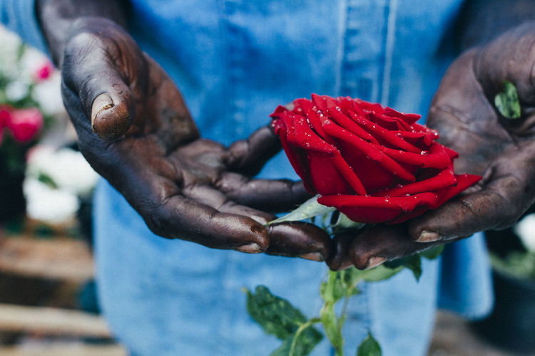 A hawker holds a rose carefully Care Close-up Flower Focus On Foreground Fragility Freshness Holding Human Body Part Human Hand One Person Real People Red Rose - Flower Roses Street Seller The Street Photographer - 2017 EyeEm Awards The Week On EyeEm Editor's Picks