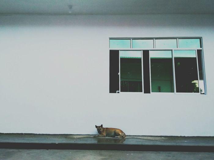 Dog Dogs Rain