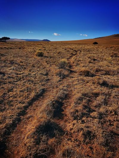 Following Antelope trails in San Antonio mountain ..