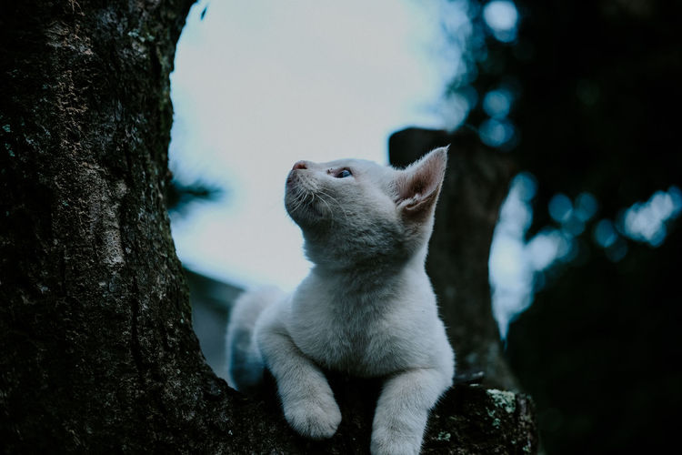 A domestic cat is staring at a tree