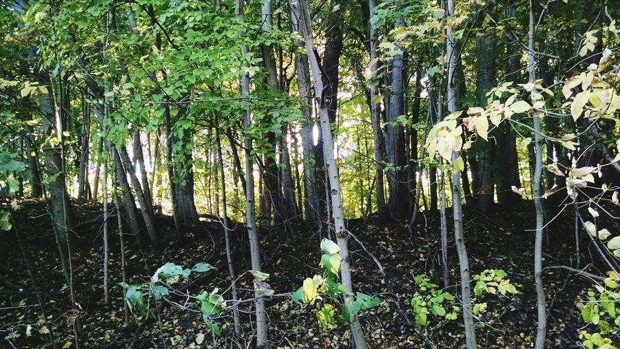 Forest Eyeem Michigan My Running View EyeEm Nature Lover Fall Beauty