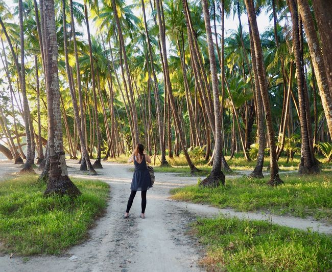 Taking Photos Beauty In Nature Casual Clothing Coconut Palm Tree Day Direction Footpath Forest Full Length Growth Land Nature One Person One Woman Only Outdoors Palm Tree Plant Road The Way Forward Tree Tropical Climate Walking