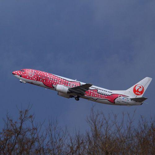 sakura-jimbe Sakura-jimbe Jimbe Jta Komatsu Komatsu Airport Airplane