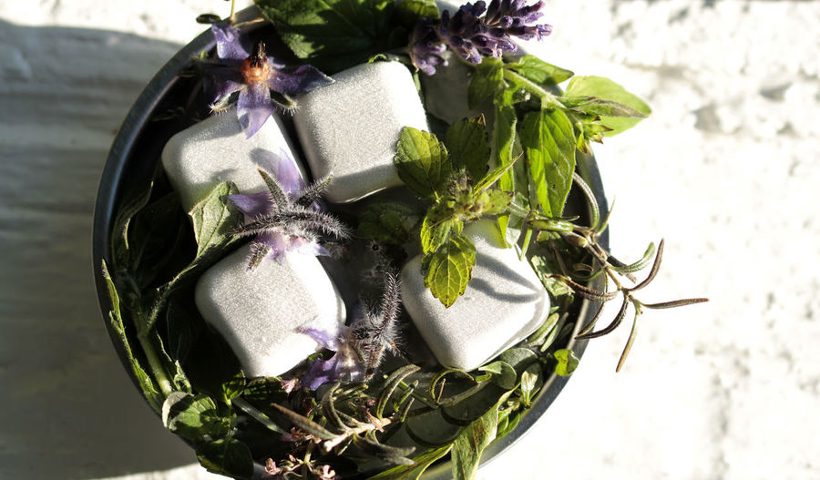 Herbs Ice Cubes Eingefroren Plant Close-up Indoors  No People Nature Flowering Plant Flower Still Life Freshness Table Leaf Plant Part Green Color Purple