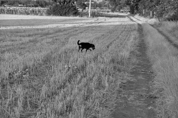 Dog walking on field
