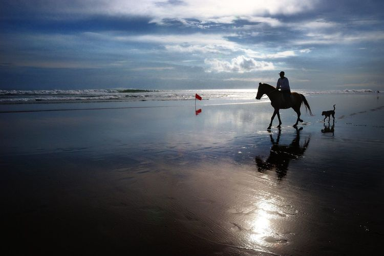 Silhouette person riding on horse at beach