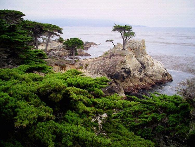 Nature Landscape Ocean California Lone Cypress 17 Mile Drive