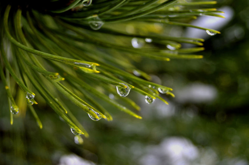 Close-Up Of Raindrops On Plant
