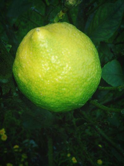 Lemon Verde Limon