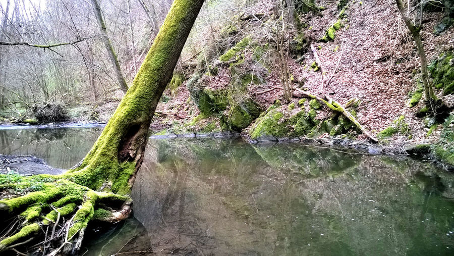 Beauty In Nature Creek Day Early Spring Forest Growth Landscape Lush - Description Mournful Nature No People Outdoors Reflection River Scenics Stream - Flowing Water Tranquil Scene Tranquility Transience Travel Destinations Tree Tree Trunk Triste Vacations Water
