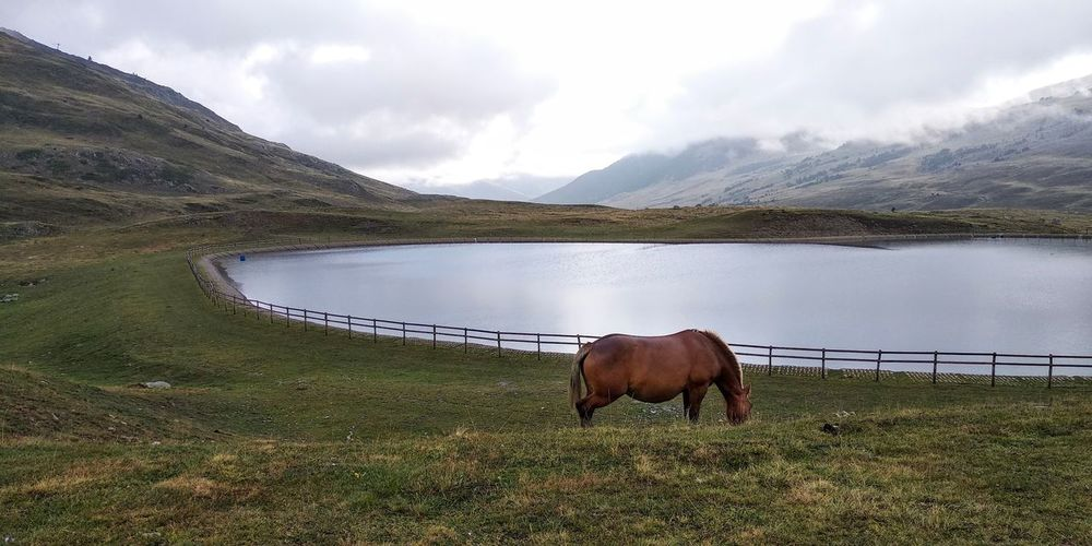 Horse grazing on grassy field by lake against cloudy sky