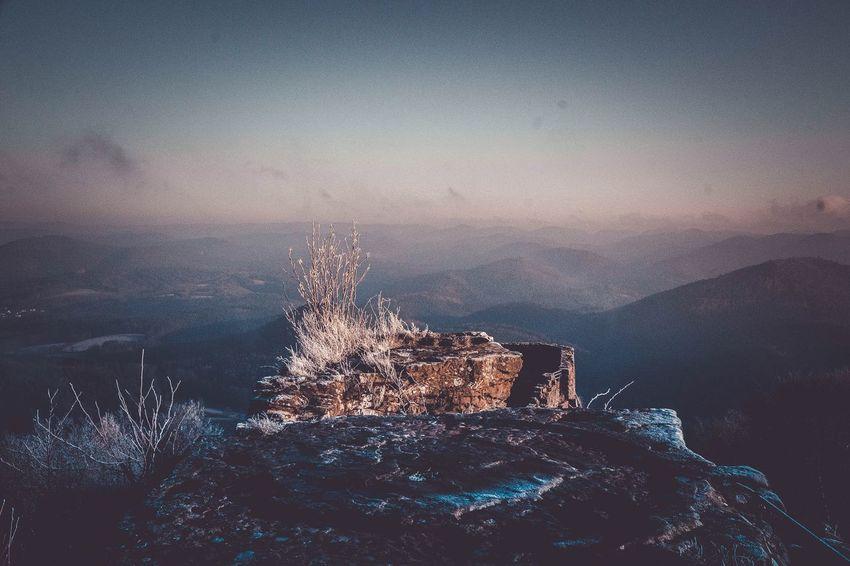 Wegelnburg Outdoors Nature Winter Castle Treetop Forest Landscape Idyllic Cold Temperature Adventure