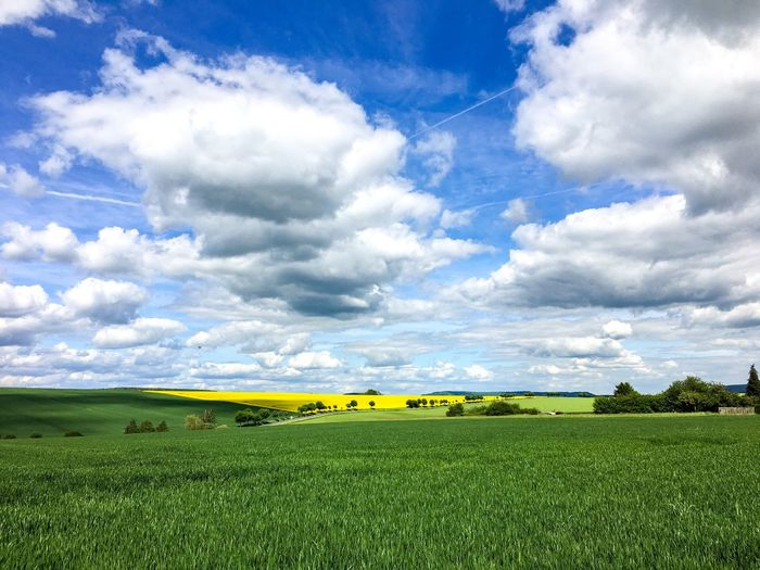Betterlandscapes Nature Sky Landscape Tree Day Clouds And Sky Field Colours Outdoors Grass Yellow Tranquility Farm Agriculture Beautiful Nature Growth Canola Scenics Beauty In Nature No People Green Color Colours Of Nature Rural Scene Tranquil Scene Cloud - Sky