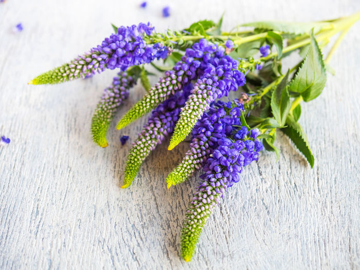 Flower Flowering Plant Purple Plant Close-up Freshness Fragility Vulnerability  Indoors  Inflorescence No People Flower Head Nature Table Beauty In Nature Green Color Petal Wood - Material Growth Selective Focus Pollen