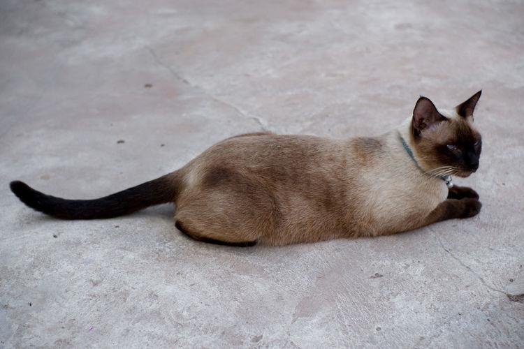 Cat sleeping on floor in city