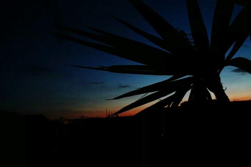 Tree Silhouette Sunset Sunset Silhouettes
