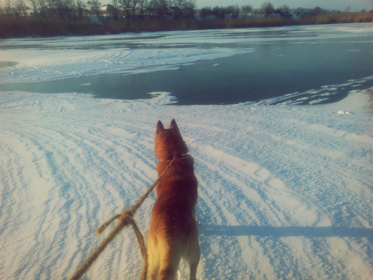 Rear View Of Dog Standing On Snow Covered Field By Lake