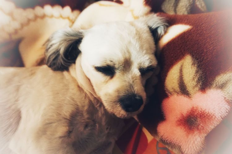 Close-up portrait of puppy relaxing at home