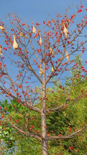 Bird Nest Beauty In Nature BIMA Bird Nest DELTA API Nature Outdoors Rumahalir Tree