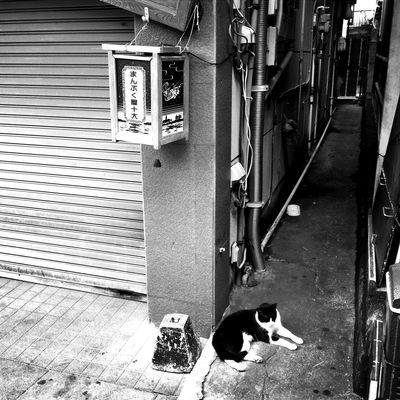 江の島モノクロ☻ 江の島 モノクロ 白黒 にゃん にゃんこ 猫 ねこ