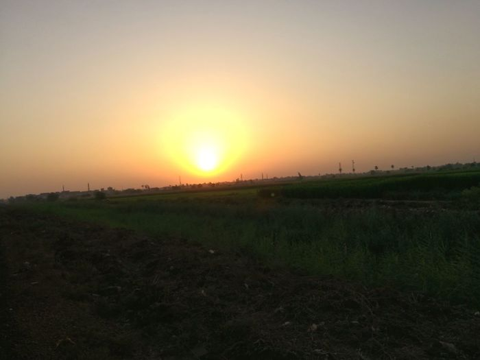 Sunset in Egypt Sunset Beauty In Nature Landscape Agriculture Horizon Over Land Scenics Sun Field Sky Nature Sunlight Tranquil Scene No People Outdoors Silhouette Tranquility Rural Scene Horizon Clear Sky Tree