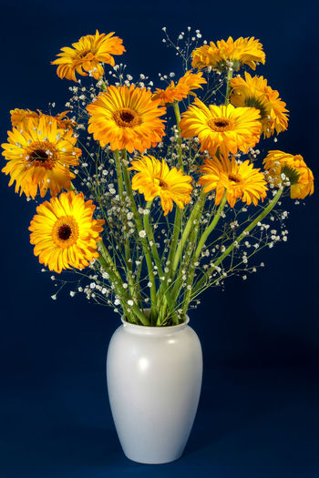 Close-up of yellow flowers in vase against black background