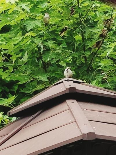 Birds Wood -