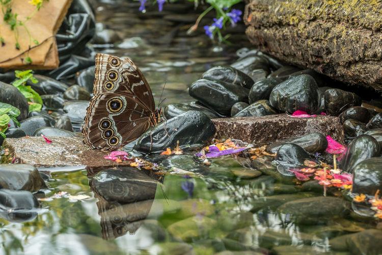 Butterfly on stones in water