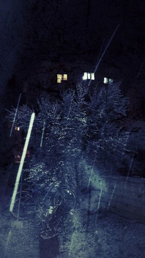 Cycle Snow ❄ Tree Olive Tree Dark Photo Night Darkness No People Garden Art Amazing Nature Light House Windows