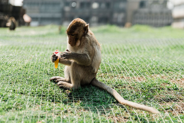 Monkeys at the temple ruins in Lopburi, Thailand Lopburi Lopburi Thailand Lopburi Location Lopburi, Thailand Thailand_allshots Thailandtravel Thailand Photos Thailand🇹🇭 Monkey Monkeys Temple Temple - Building Temple Architecture Temples Thai