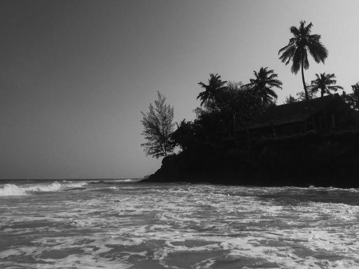 Diani Beach, Ukunda, Kenya. Tree Palm Tree Water Nature Wave Beach No People Beauty In Nature EyeEm Best Shots VSCO Kenya Travel Destinations Africa EyeEm Best Edits Adventure Travel Landscape Ocean Seascape Ocean View Indian Ocean Black & White