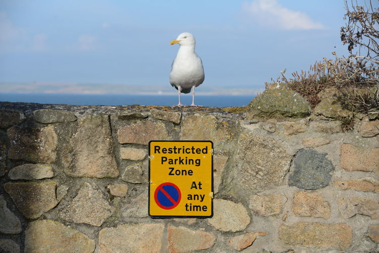 Seagull perching on a wall