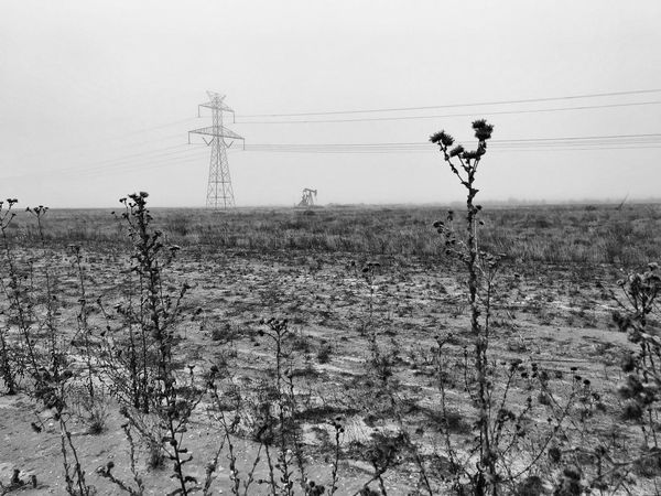 Winter cotton field and pump jack with power lines Monochrome Photography Foggy Morning Pump Jack Petroleum Industry EyeEm Selects Cable Electricity Pylon Power Line  Electricity  Power Supply Connection Field No People Technology Plant Day Nature Fuel And Power Generation Landscape Outdoors Growth Sky Telephone Line