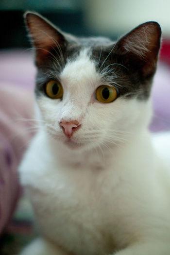 Cute cat name