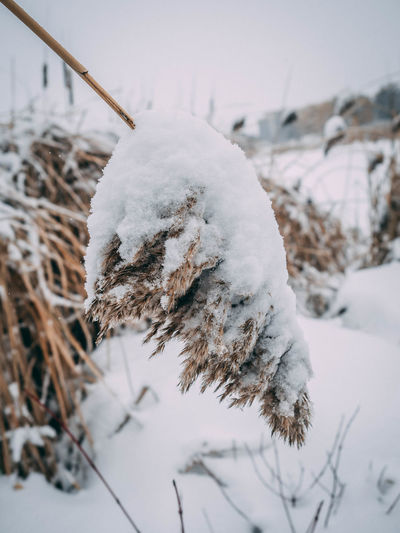 Beauty In Nature Close-up Cold Temperature Covering Day Field Focus On Foreground Frozen Ice Land Nature No People Outdoors Plant Snow Tranquility Tree White Color Winter